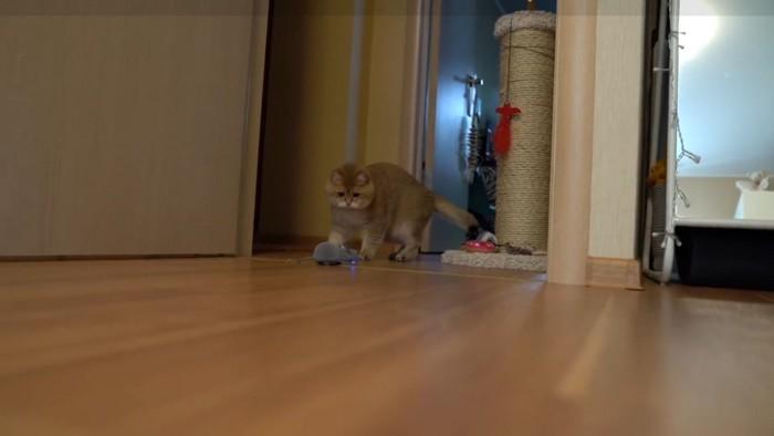 怖がりながらも近づく猫