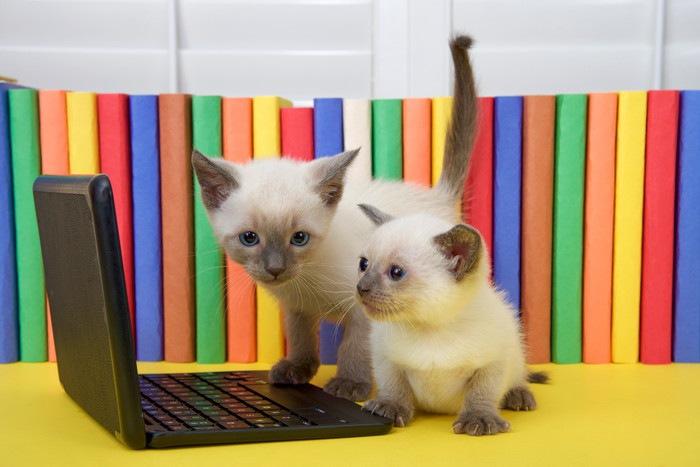 2匹の子猫とパソコン