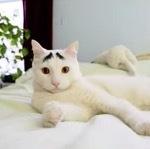 珍しい柄猫3