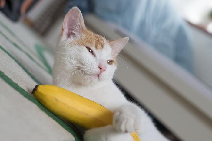 猫とバナナ