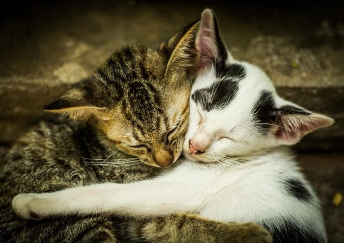 寝ている二匹の子猫