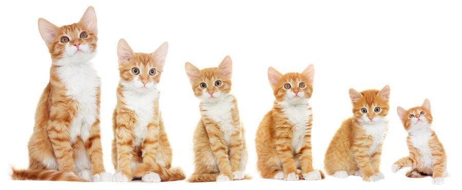 6匹並んだ猫