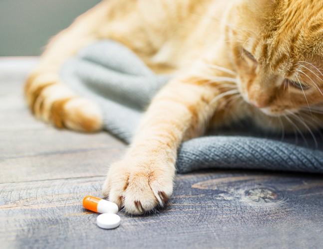 口内炎の薬を触る猫