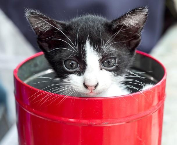 赤い缶詰に入る猫
