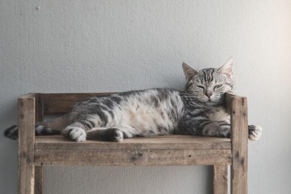 木のシェルフの上で寝る猫