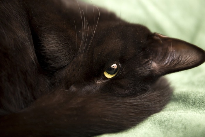 チラ見する黒猫