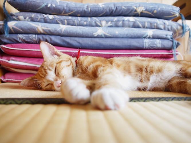 畳の上で気持ちよさそうに眠る猫