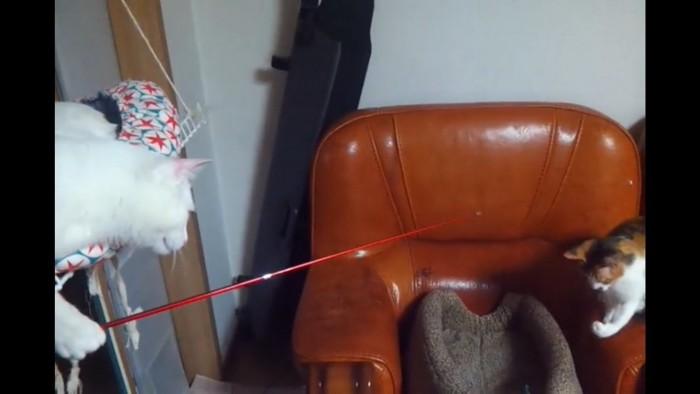 猫に釣られる猫