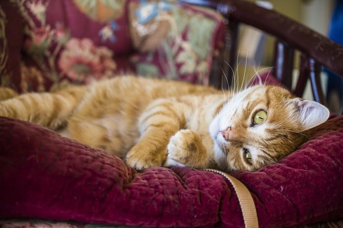 ソファーで寝る猫