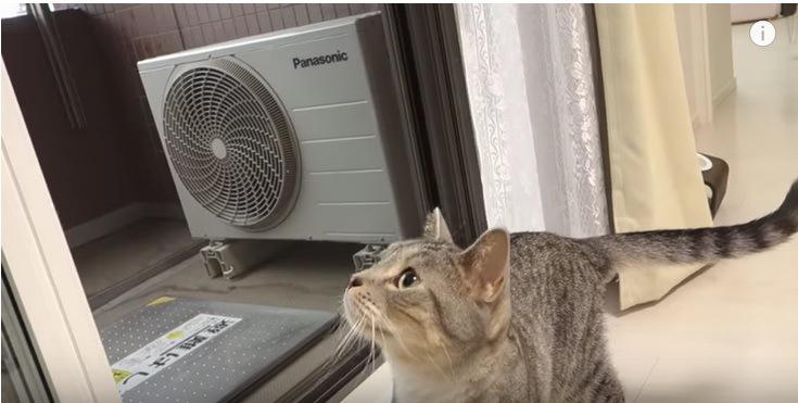 窓際で上を見上げる猫
