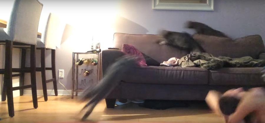 一斉に逃げ出す猫