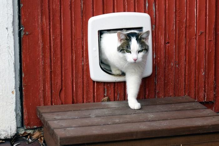キャットドアで出入りする猫