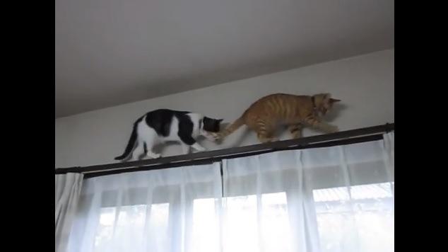 レール中央を歩く2匹の猫