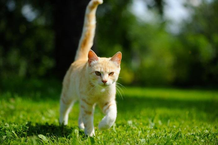 緑の上を歩く猫