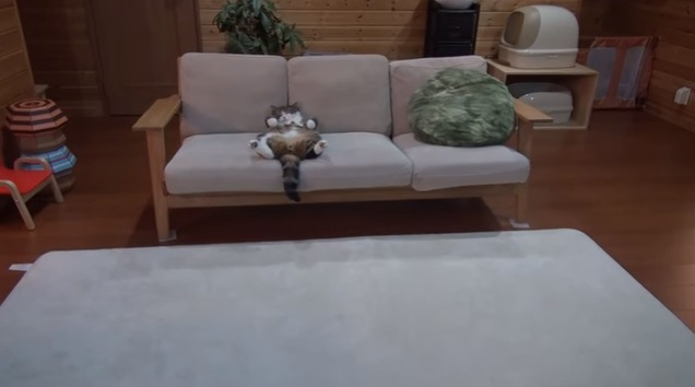 ソファーで眠る猫(遠くから)