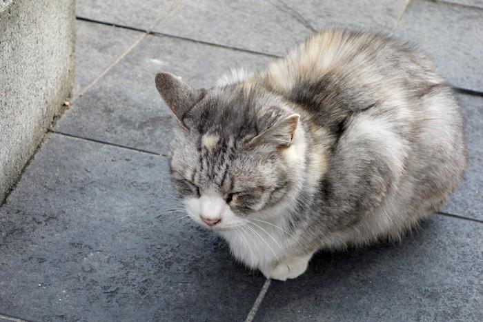 丸くなっている老猫