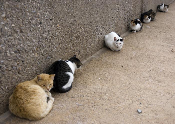 壁際に沢山の猫