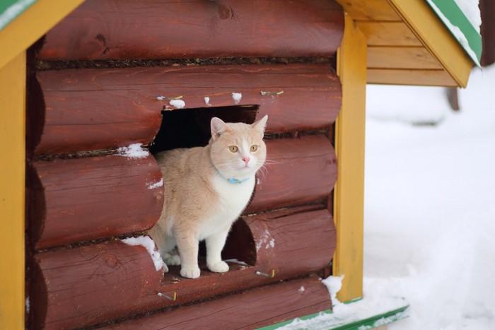 屋外に作られたDIYした小屋の中に入る猫