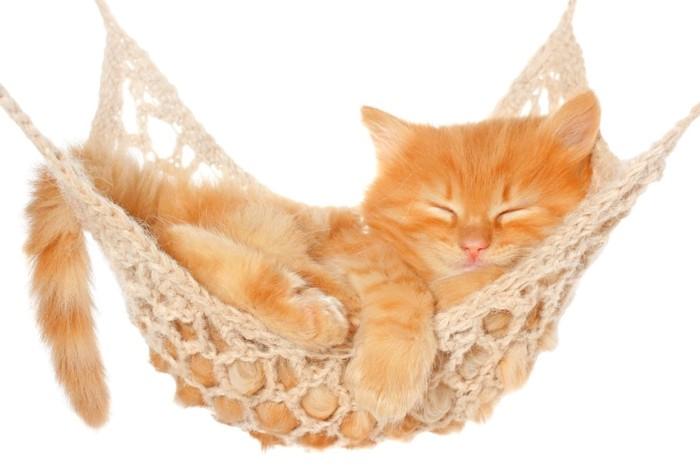 ハンボックで眠る猫