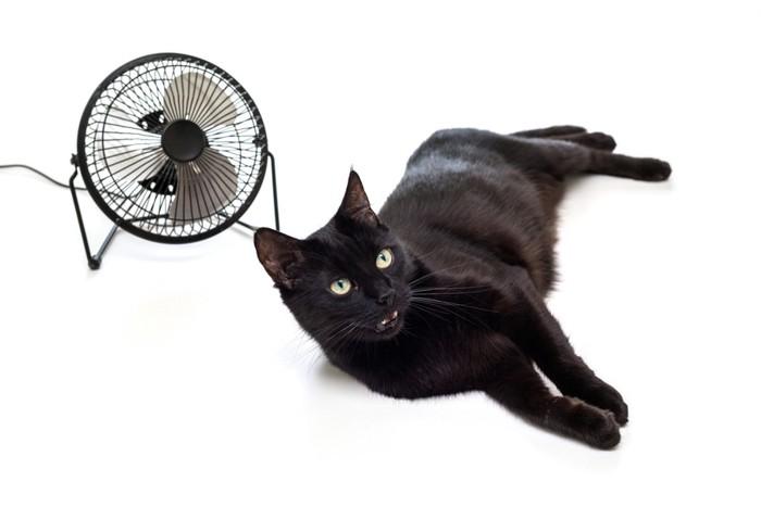 黒猫と扇風機