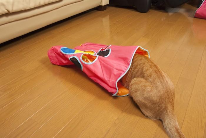 amazonにありそうなトンネルのおもちゃに顔を入れる茶トラ猫