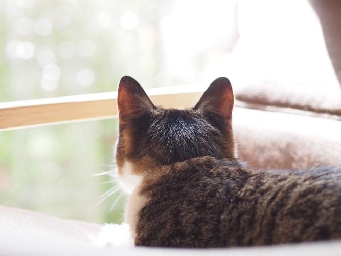 ソファーの上で外を眺めている猫の後頭部