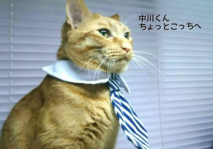 ネクタイをしたメポ