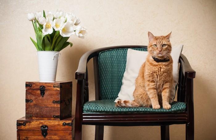 リビングの椅子の上に行儀よく座る猫