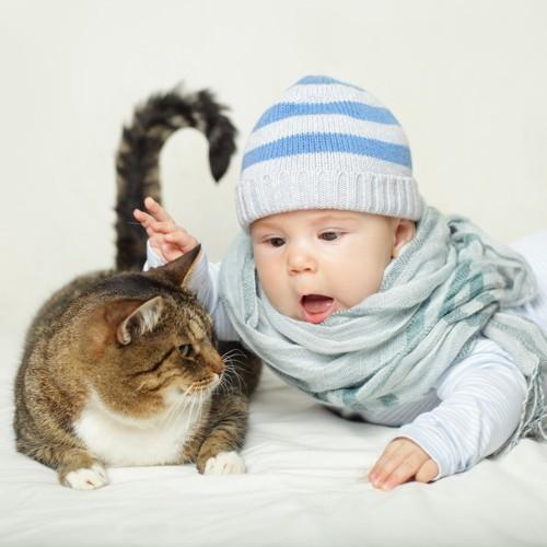 猫に触ろうとする赤ちゃん