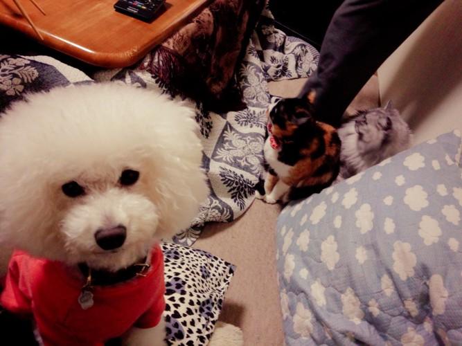 猫2匹と犬