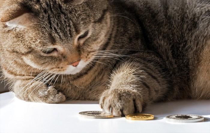 お金に触れている猫