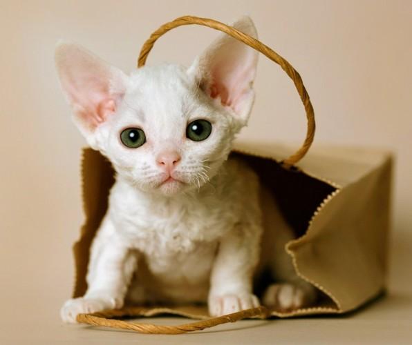 袋から顔をだす猫