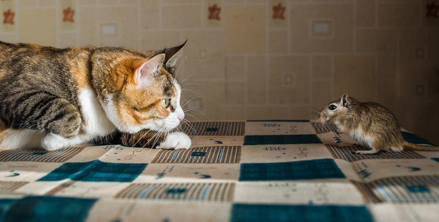 ネズミとにらめっこ中の猫