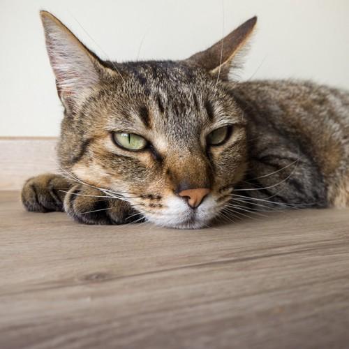 退屈そうな猫