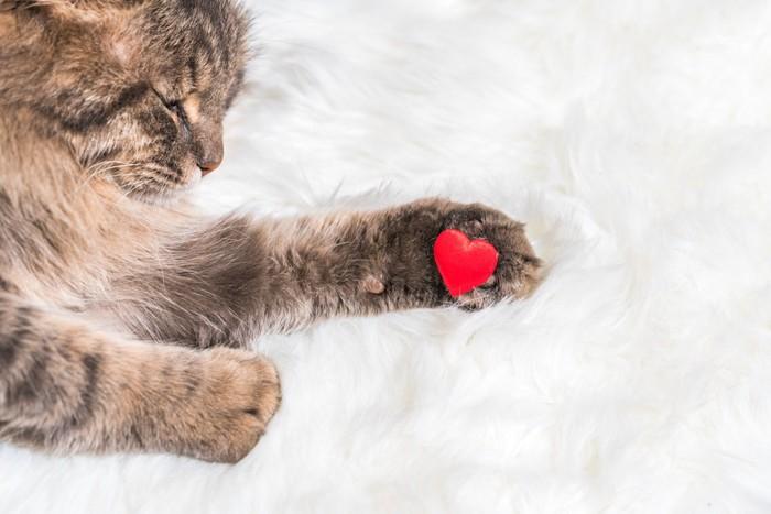 肉球にハートを乗せた猫