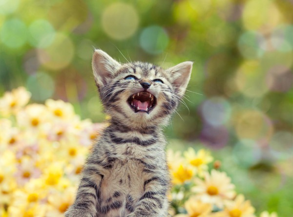 外で鳴く子猫