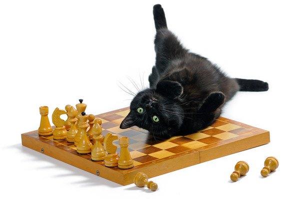 チェス盤に寝そべる黒猫