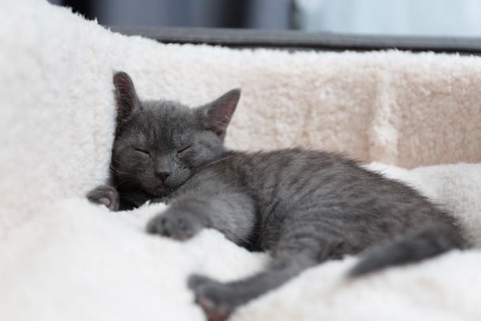 毛布をふみふみする仔猫