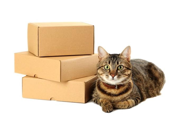 猫とダンボール箱