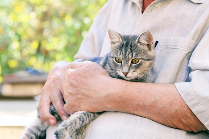 老人に抱っこされる猫