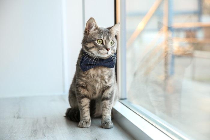 窓から外を見つめる猫の写真
