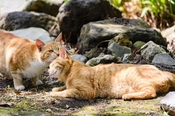 毛づくろいし合う二匹の猫