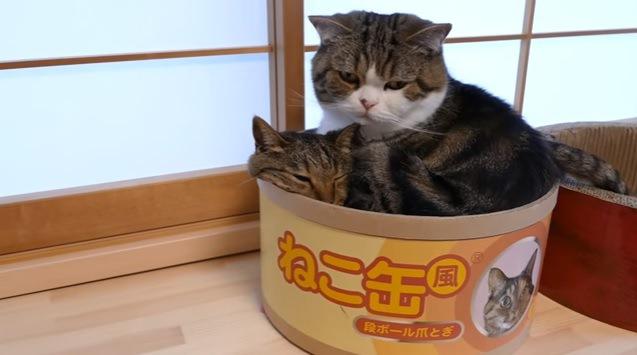 「ねこ缶」と書かれた段ボールと猫たち