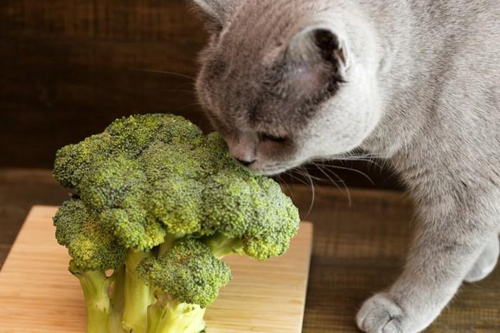 猫とブロッコリー