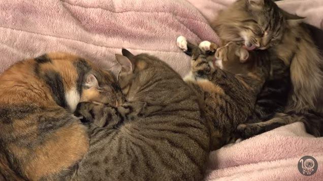 抱き合う猫と毛づくろいする猫たち