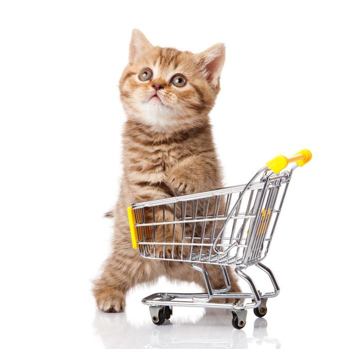 ショッピングカートと子猫