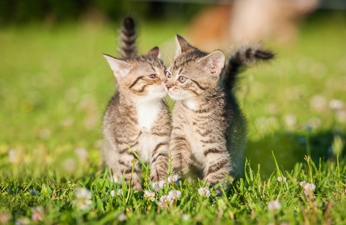 2匹で歩く猫