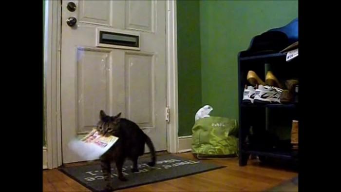 ポストカードをくわえる猫