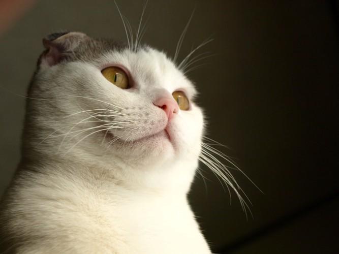 下から見た猫