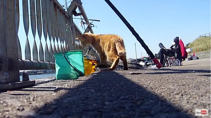 容器を見つめる猫